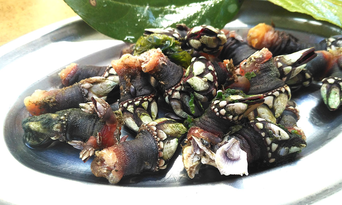 Barnacles, and how to eat them. Fresh in Vigo, Spain.